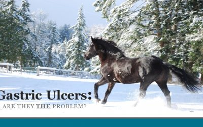Feeding Horses to Avoid Gastric Ulcers