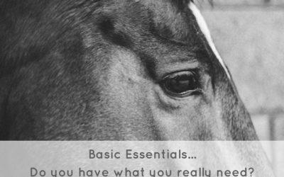 Basic Essentials For The Horse Rider