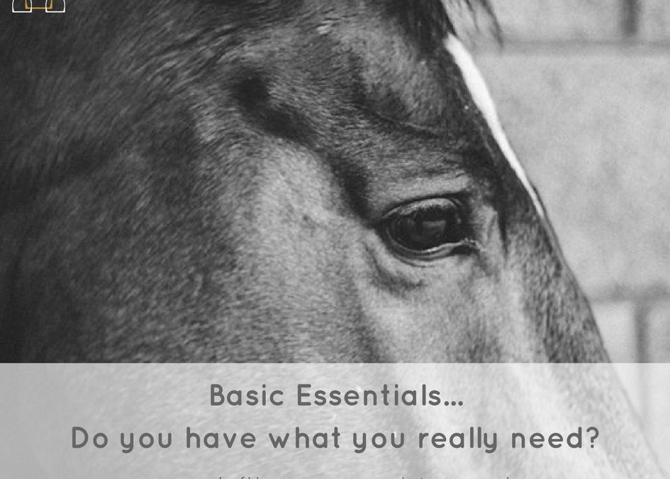 Basic Essentials For The Horse Rider